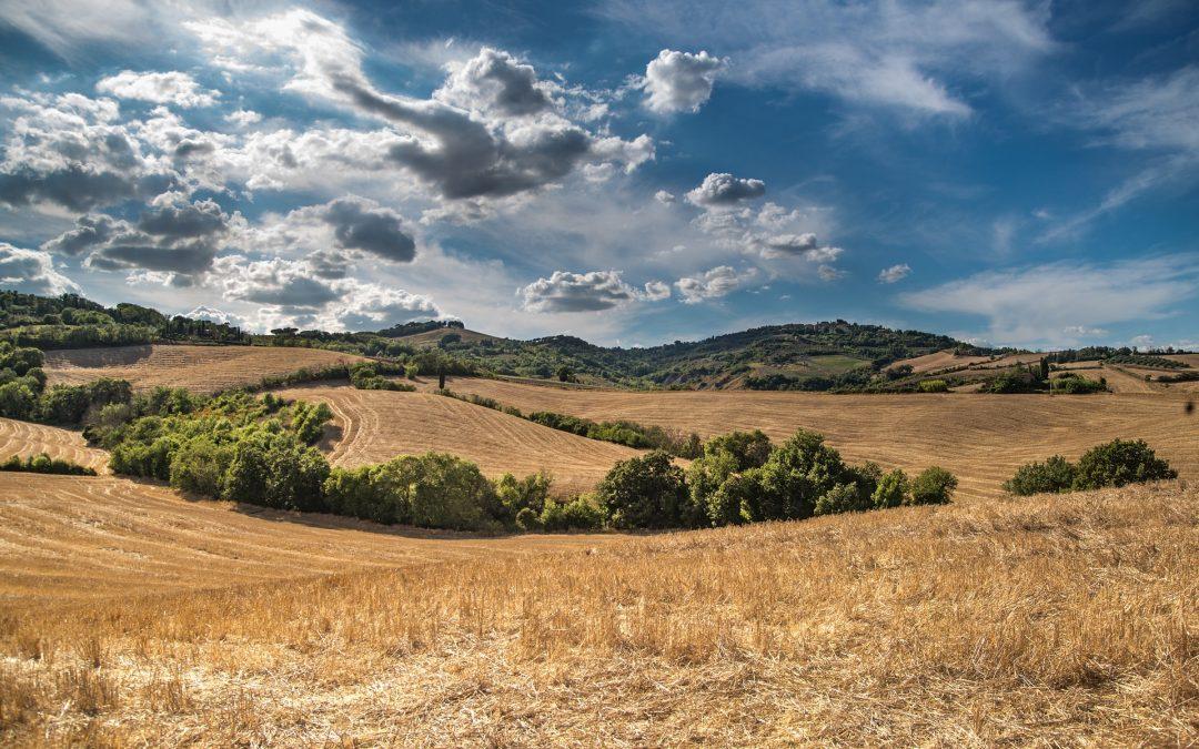 """""""Transizione ecologica"""" del settore agroalimentare europeo"""