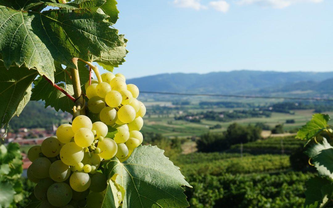 Del paisaje al plato: una estrategia de desarrollo local y turismo gastronómico responsable